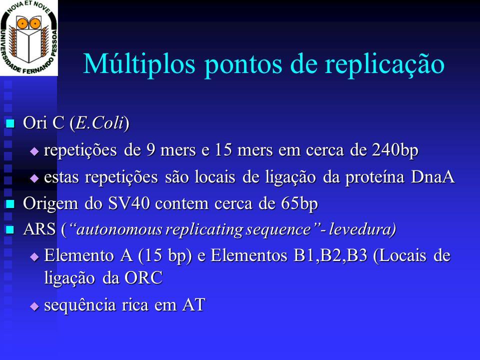 A Replicação Multiplos pontos de replicação por cromossoma Multiplos pontos de replicação por cromossoma A replicação ocorre nas duas cadeias do DNA A replicação ocorre nas duas cadeias do DNA A replicação é contínua na cadeia leading A replicação é contínua na cadeia leading A replicação é descontínua na cadeia lagging A replicação é descontínua na cadeia lagging Fragmentos de okasaki Fragmentos de okasaki Síntese dos telómeros: função fisiológica da telomerase Síntese dos telómeros: função fisiológica da telomerase A correcção de erros incorporada na polimerase A correcção de erros incorporada na polimerase
