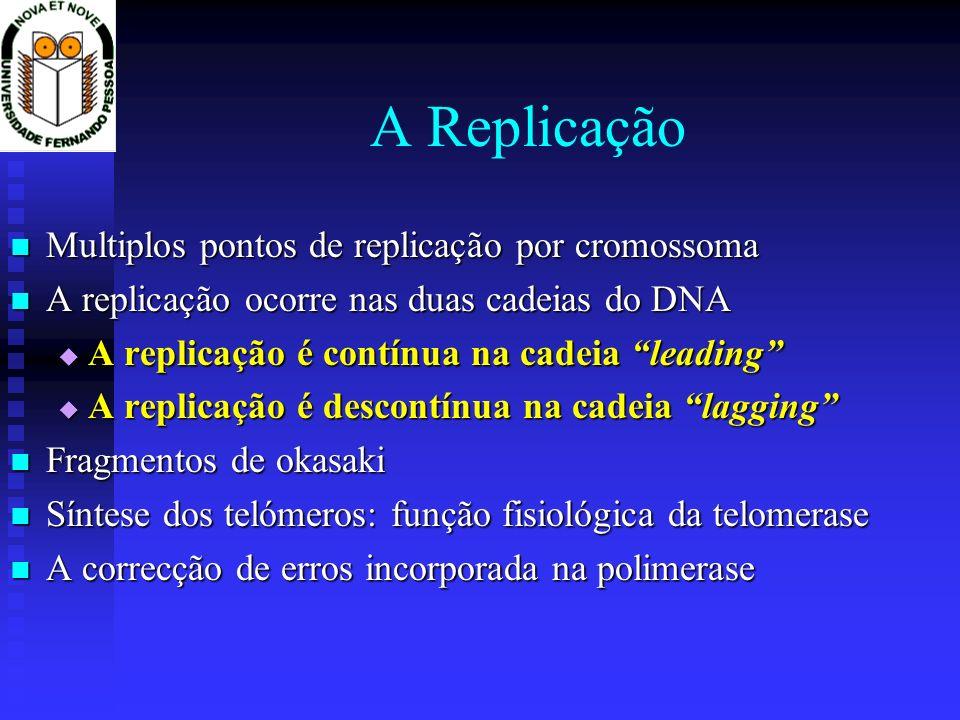 A Replicação Multiplos pontos de replicação por cromossoma Multiplos pontos de replicação por cromossoma A replicação ocorre nas duas cadeias do DNA A