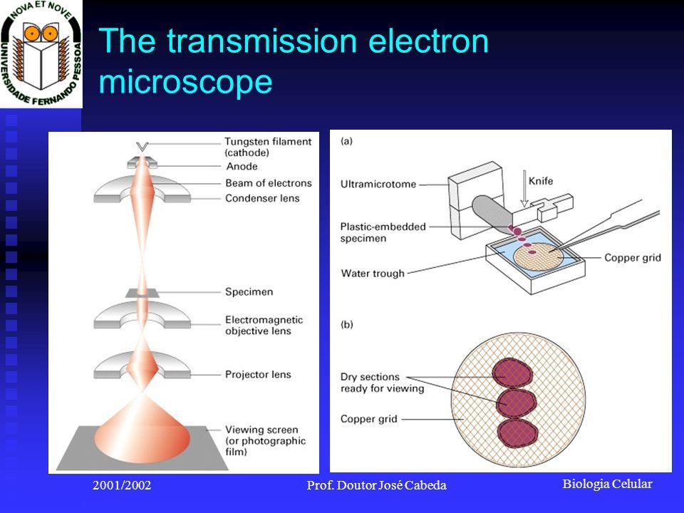 Biologia Celular 2001/2002Prof. Doutor José Cabeda The transmission electron microscope