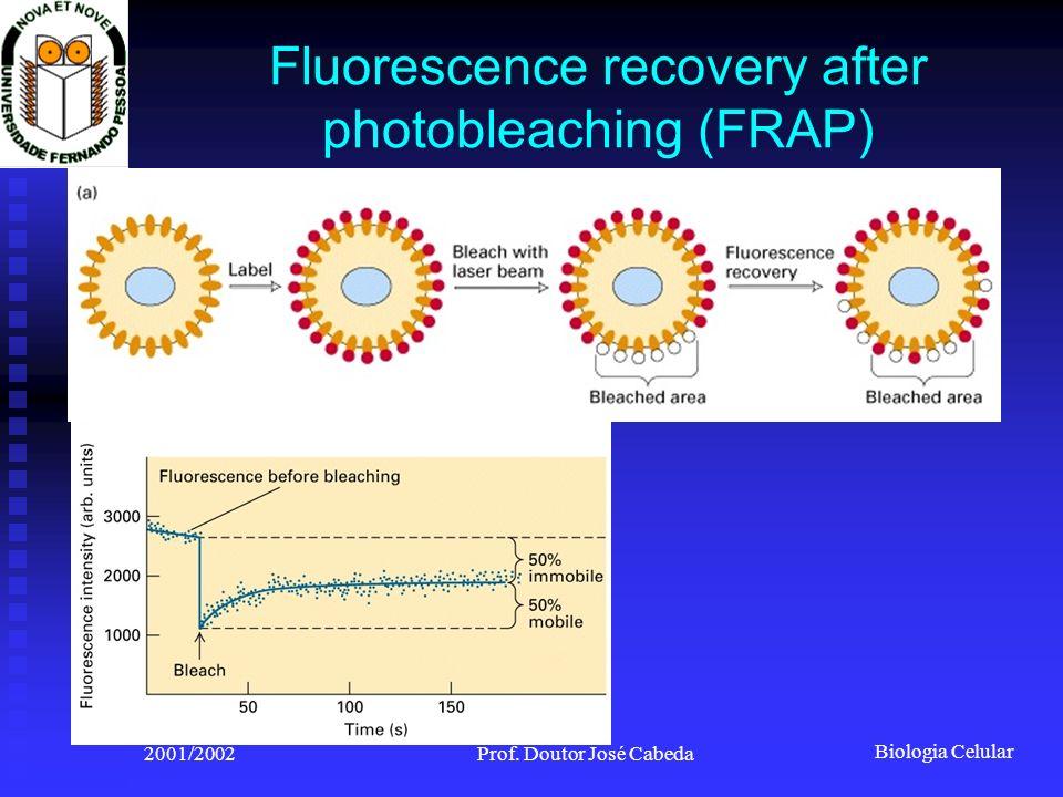 Biologia Celular 2001/2002Prof. Doutor José Cabeda Fluorescence recovery after photobleaching (FRAP)