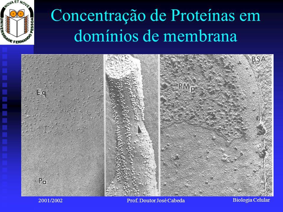 Biologia Celular 2001/2002Prof. Doutor José Cabeda Concentração de Proteínas em domínios de membrana