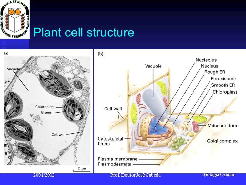 Biologia Celular 2001/2002Prof. Doutor José Cabeda Plant cell structure Figure 5-43
