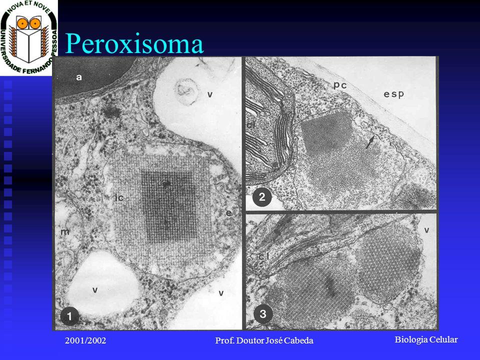 Biologia Celular 2001/2002Prof. Doutor José Cabeda Peroxisoma