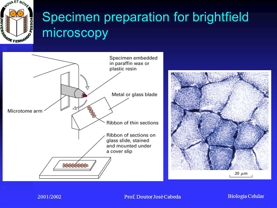 Biologia Celular 2001/2002Prof. Doutor José Cabeda Specimen preparation for brightfield microscopy