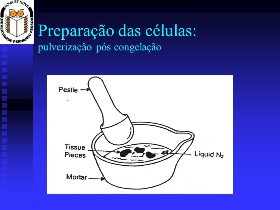 Preparação das células: pulverização pós congelação