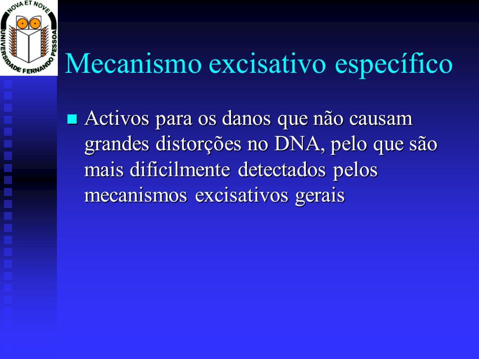 Mecanismo excisativo específico Activos para os danos que não causam grandes distorções no DNA, pelo que são mais dificilmente detectados pelos mecani