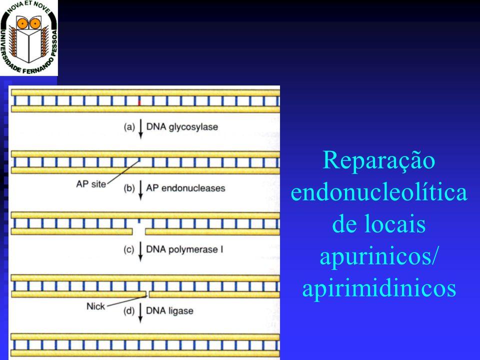 Reparação endonucleolítica de locais apurinicos/ apirimidinicos