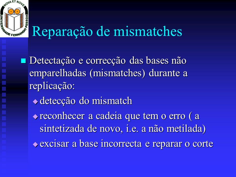 Reparação de mismatches Detectação e correcção das bases não emparelhadas (mismatches) durante a replicação: Detectação e correcção das bases não empa