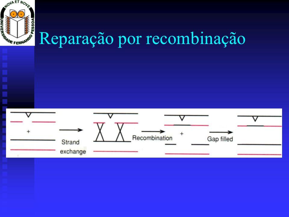 Reparação por recombinação