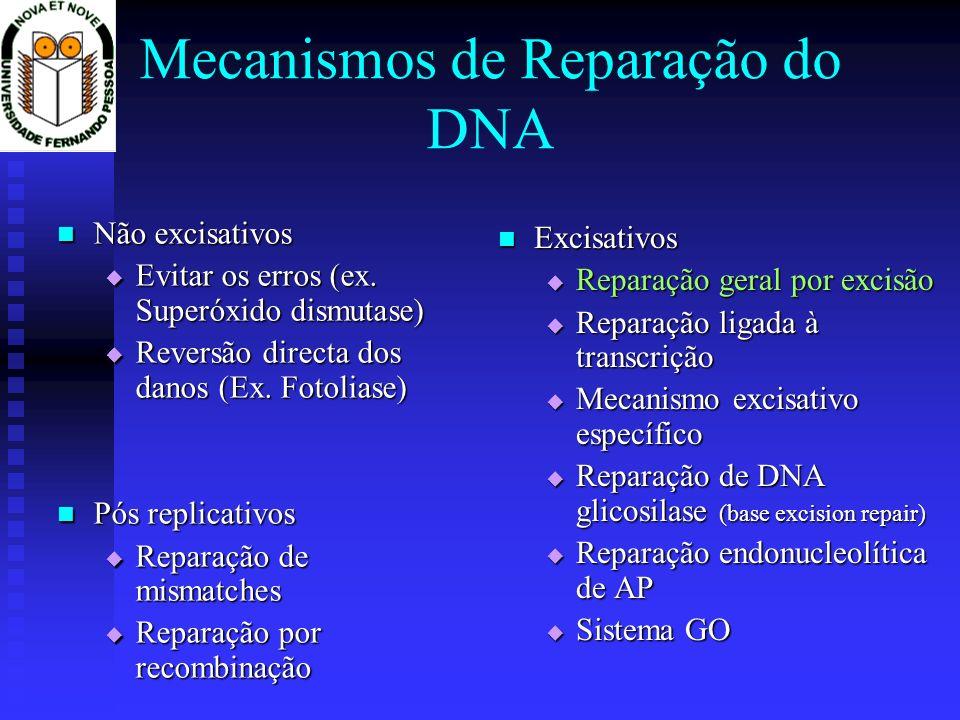 O sistema GO (8-oxodG) Duas glicosilases (genes mutM e mutY) trabalham com o mutT: Duas glicosilases (genes mutM e mutY) trabalham com o mutT: a mutT remove a lesão a mutT remove a lesão se ocorrer emparelha- mento com A, a mutY remove esta, ligando-se a C, seguindo-se a remoção da GO pelo mutM.