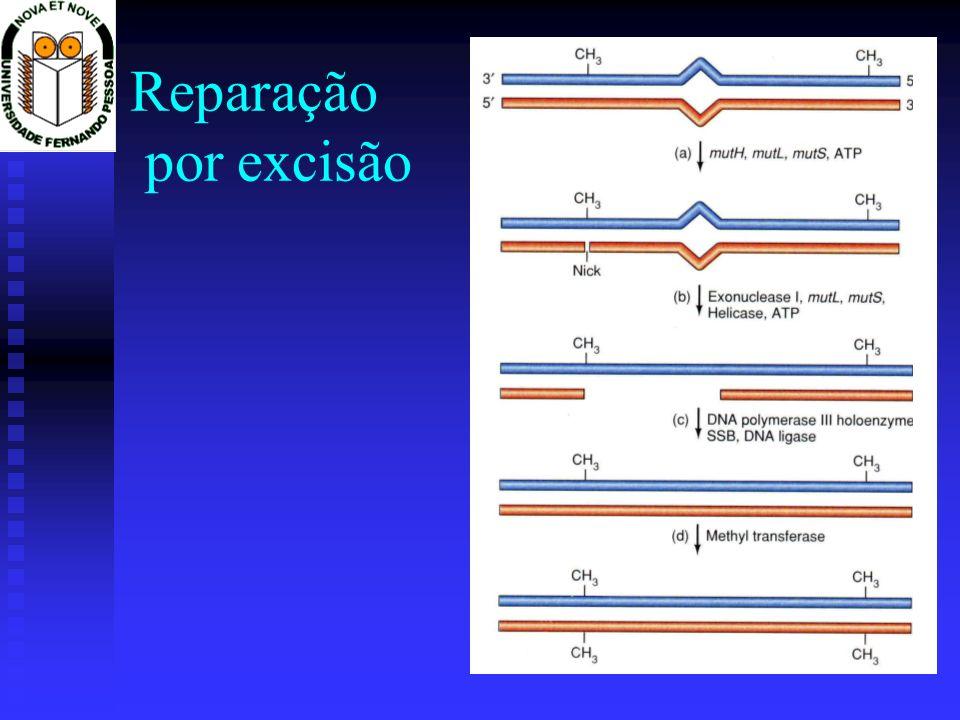 Reparação por excisão