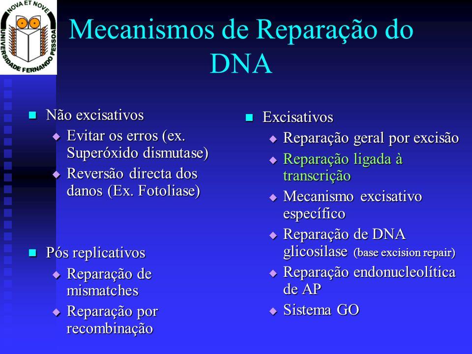 Reparação ligada à transcrição O TFIIH está envolvido na reparação O TFIIH está envolvido na reparação A cadeia transcrita é, nos genes activos, preferencialmente reparada, em desfavor da cadeia complementar A cadeia transcrita é, nos genes activos, preferencialmente reparada, em desfavor da cadeia complementar