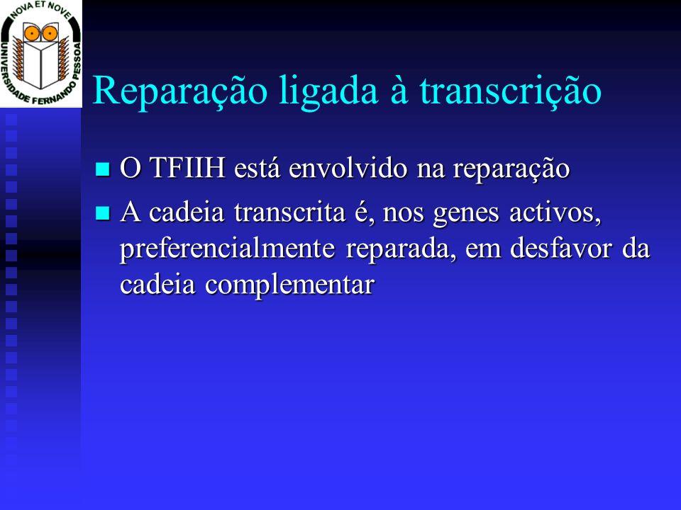 Reparação ligada à transcrição O TFIIH está envolvido na reparação O TFIIH está envolvido na reparação A cadeia transcrita é, nos genes activos, prefe