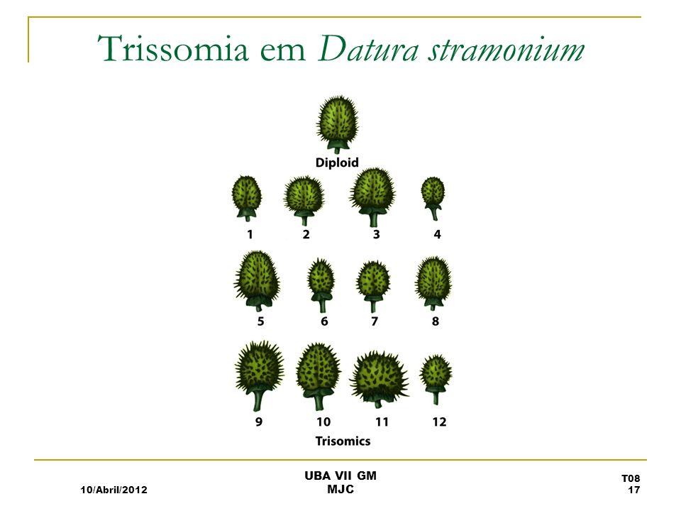 Trissomia em Datura stramonium 10/Abril/2012 T08 17 UBA VII GM MJC