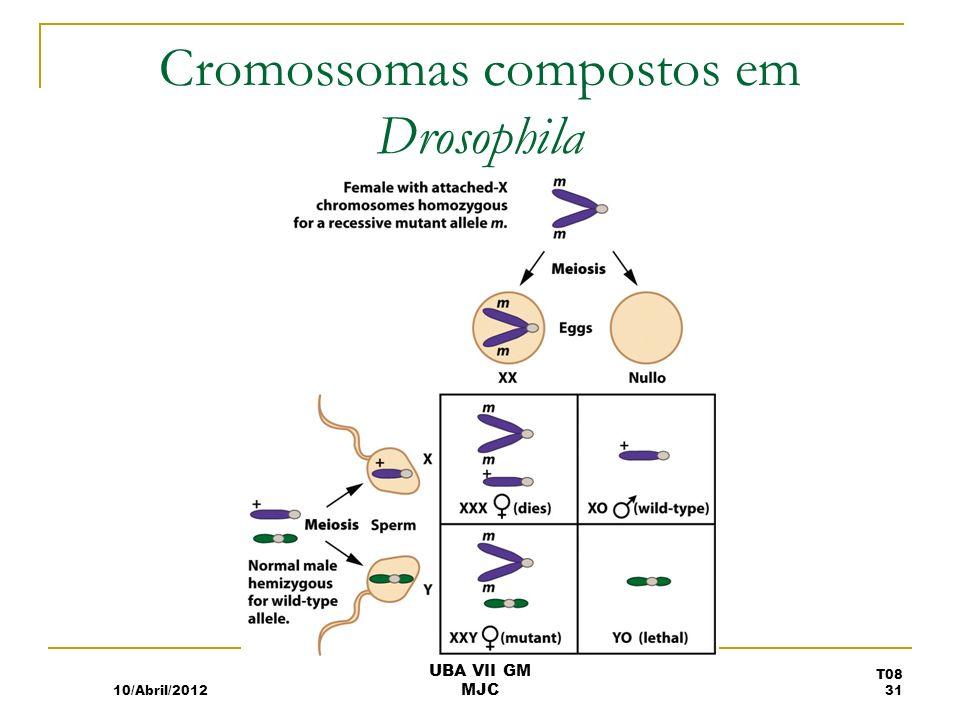 Cromossomas compostos em Drosophila 10/Abril/2012 T08 31 UBA VII GM MJC