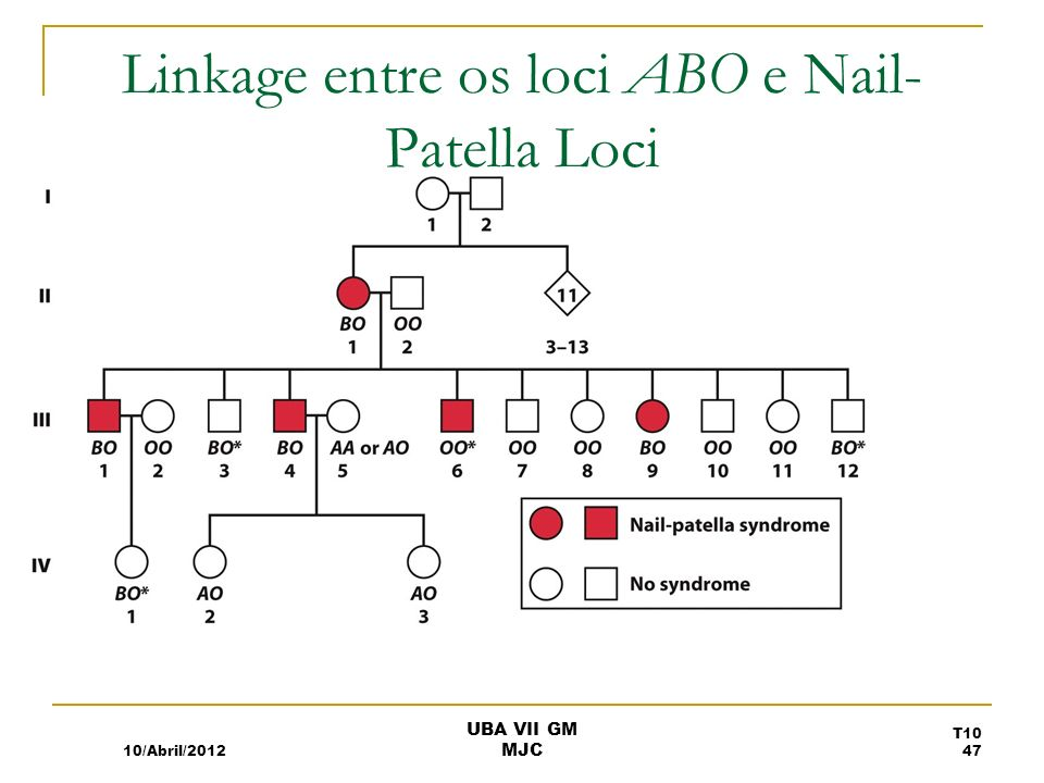 Linkage entre os loci ABO e Nail- Patella Loci 10/Abril/2012 T10 47 UBA VII GM MJC