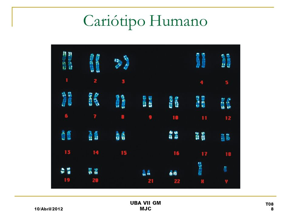 Cariótipo Humano 10/Abril/2012 T08 8 UBA VII GM MJC