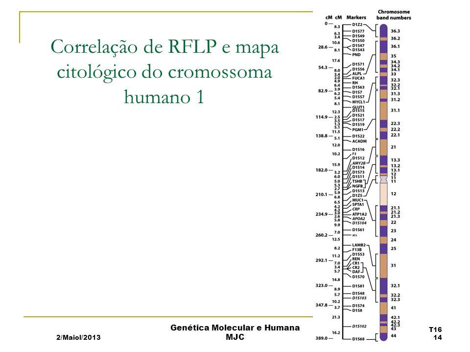 Correlação de RFLP e mapa citológico do cromossoma humano 1 2/Maiol/2013 T16 14 Genética Molecular e Humana MJC