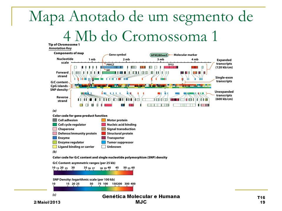 Mapa Anotado de um segmento de 4 Mb do Cromossoma 1 2/Maiol/2013 T16 19 Genética Molecular e Humana MJC