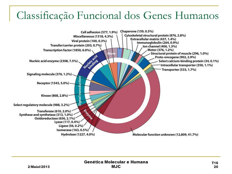 Classificação Funcional dos Genes Humanos 2/Maiol/2013 T16 20 Genética Molecular e Humana MJC