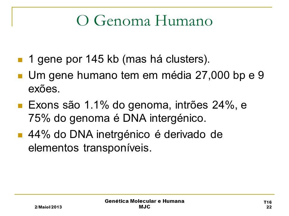 O Genoma Humano 1 gene por 145 kb (mas há clusters).