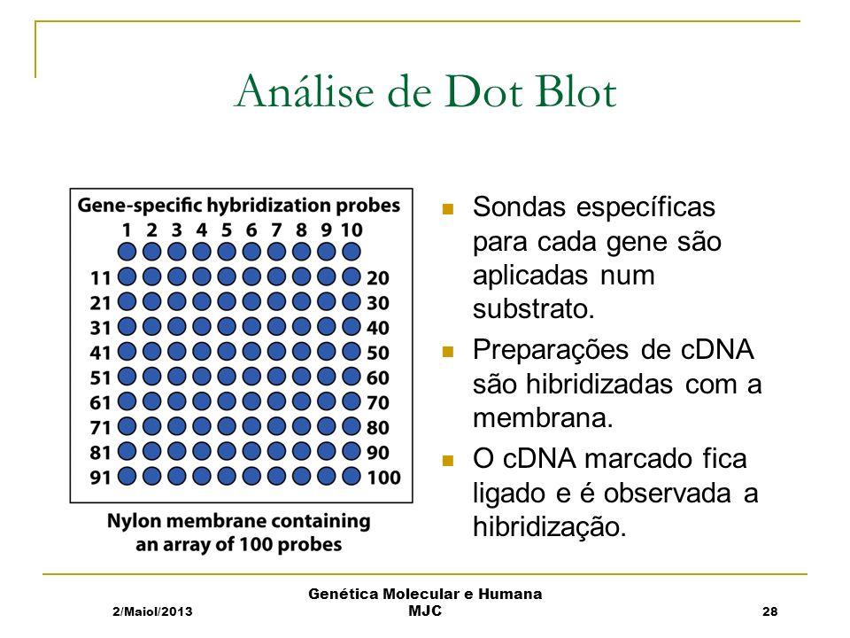 Análise de Dot Blot Sondas específicas para cada gene são aplicadas num substrato.