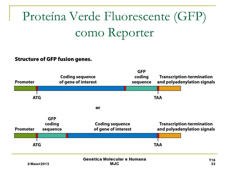 Proteína Verde Fluorescente (GFP) como Reporter 2/Maiol/2013 T16 33 Genética Molecular e Humana MJC
