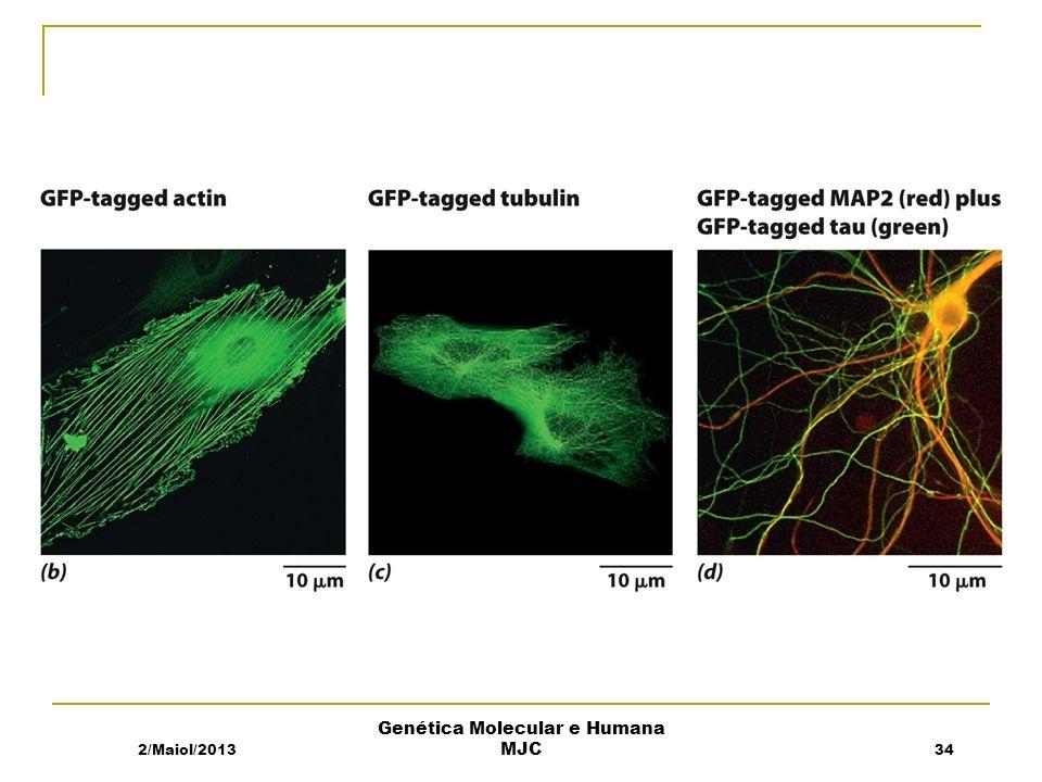2/Maiol/201334 Genética Molecular e Humana MJC