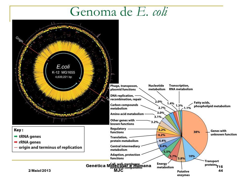 Genoma de E. coli 2/Maiol/2013 T16 44 Genética Molecular e Humana MJC
