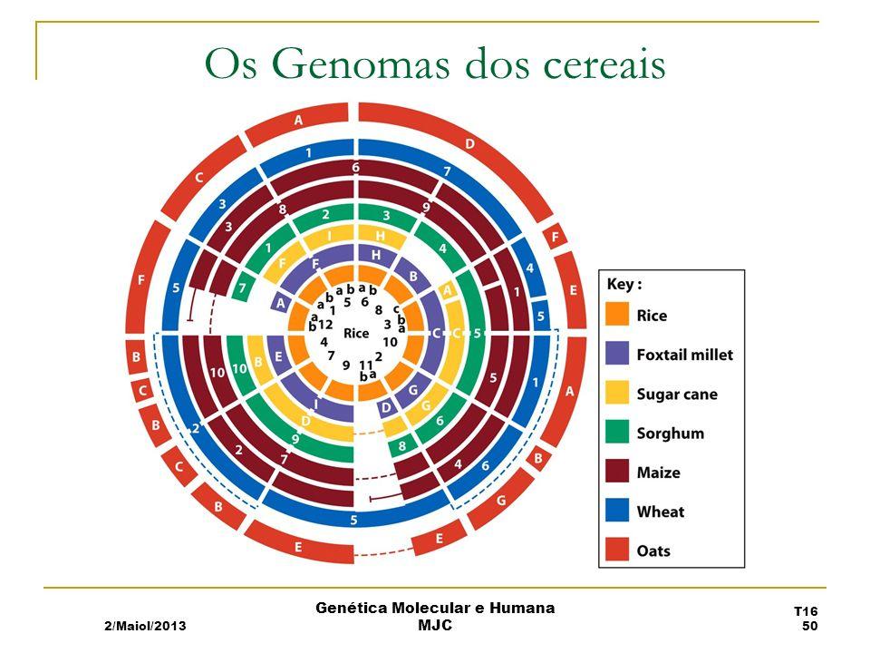 Os Genomas dos cereais 2/Maiol/2013 T16 50 Genética Molecular e Humana MJC