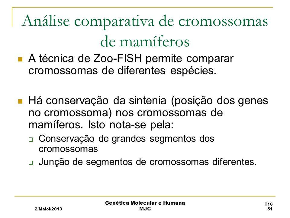 Análise comparativa de cromossomas de mamíferos A técnica de Zoo-FISH permite comparar cromossomas de diferentes espécies.