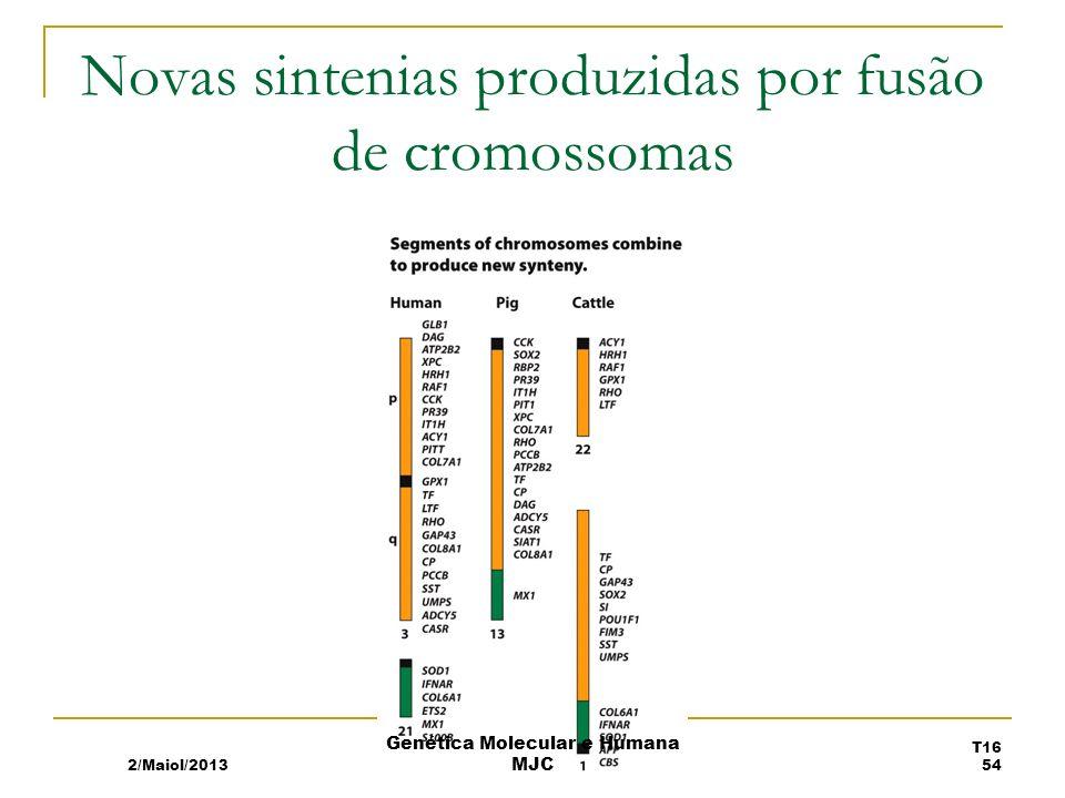 Novas sintenias produzidas por fusão de cromossomas 2/Maiol/2013 T16 54 Genética Molecular e Humana MJC