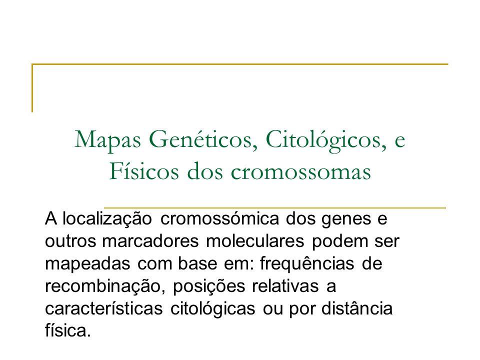 Mapas Genéticos, Citológicos, e Físicos dos cromossomas A localização cromossómica dos genes e outros marcadores moleculares podem ser mapeadas com base em: frequências de recombinação, posições relativas a características citológicas ou por distância física.