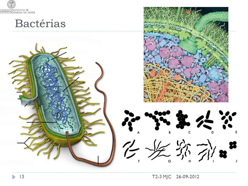 Bactérias T2-3 MJC1326-09-2012