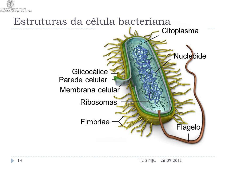 Estruturas da célula bacteriana T2-3 MJC14 Citoplasma Nucleóide Glicocálice Parede celular Membrana celular Ribosomas Fimbriae Flagelo 26-09-2012