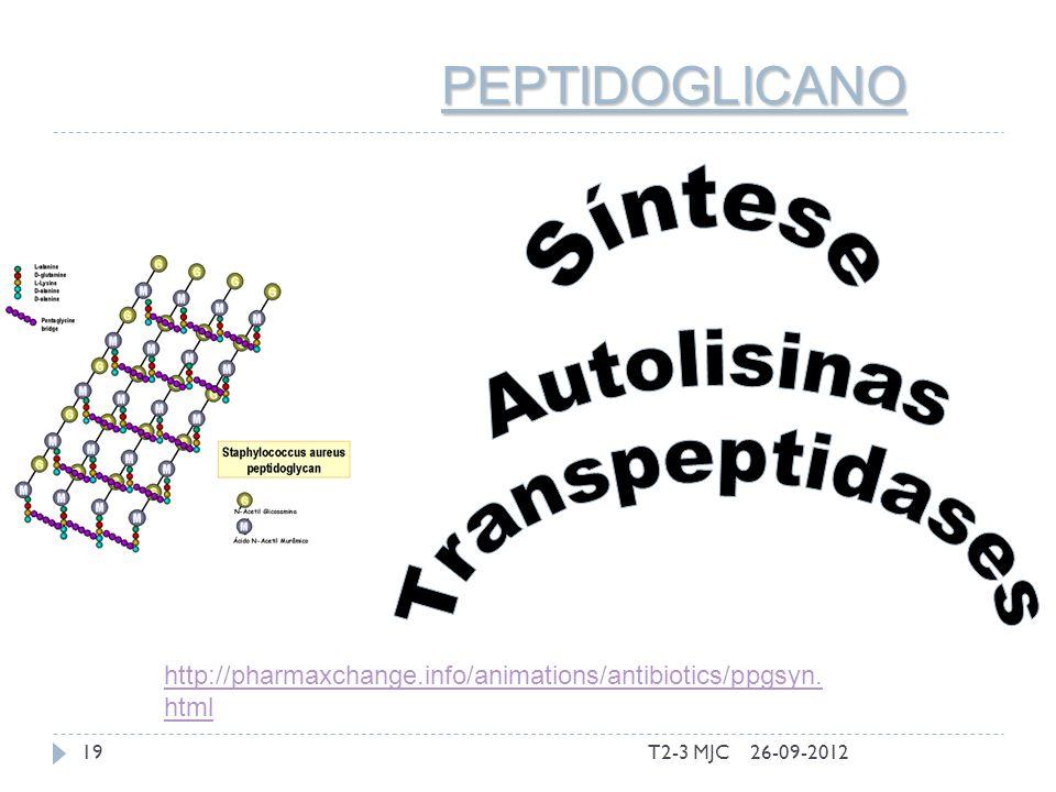 T2-3 MJC19 PEPTIDOGLICANO 26-09-2012 http://pharmaxchange.info/animations/antibiotics/ppgsyn. html