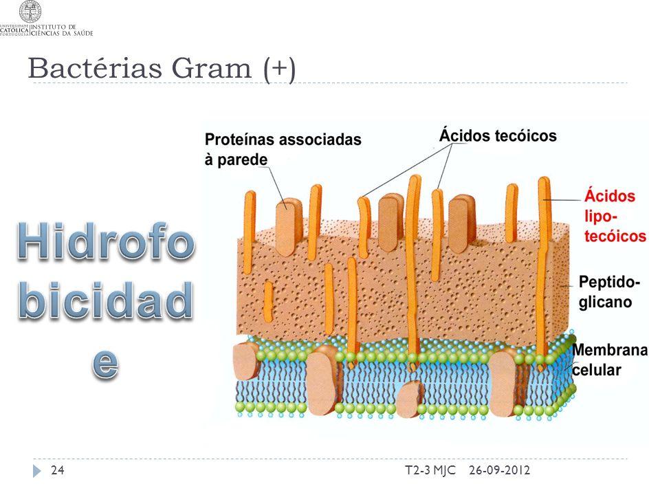 T2-3 MJC24 Bactérias Gram (+) 26-09-2012