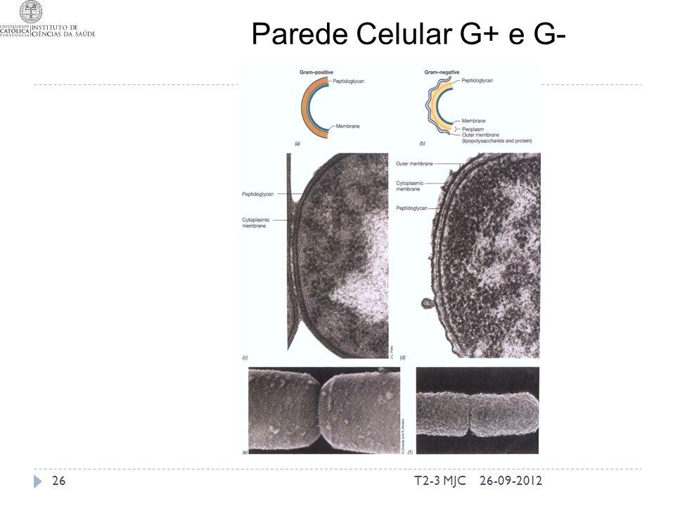 T2-3 MJC26 Parede Celular G+ e G- 26-09-2012