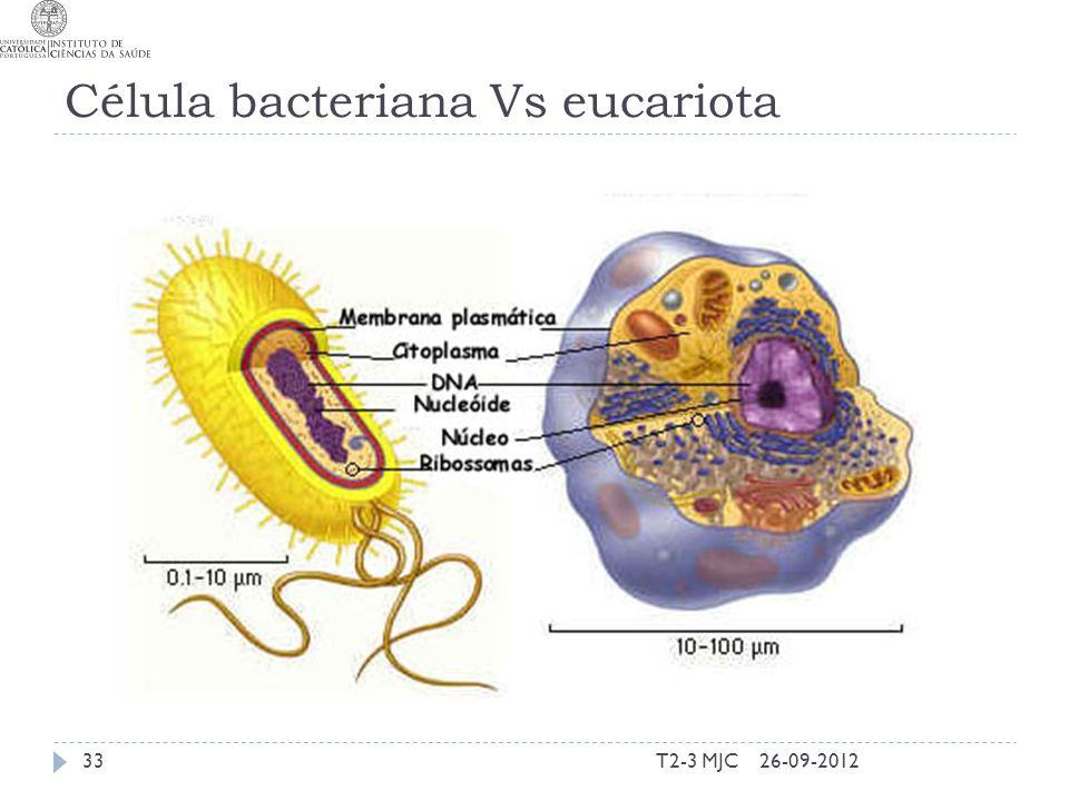 Célula bacteriana Vs eucariota T2-3 MJC3326-09-2012
