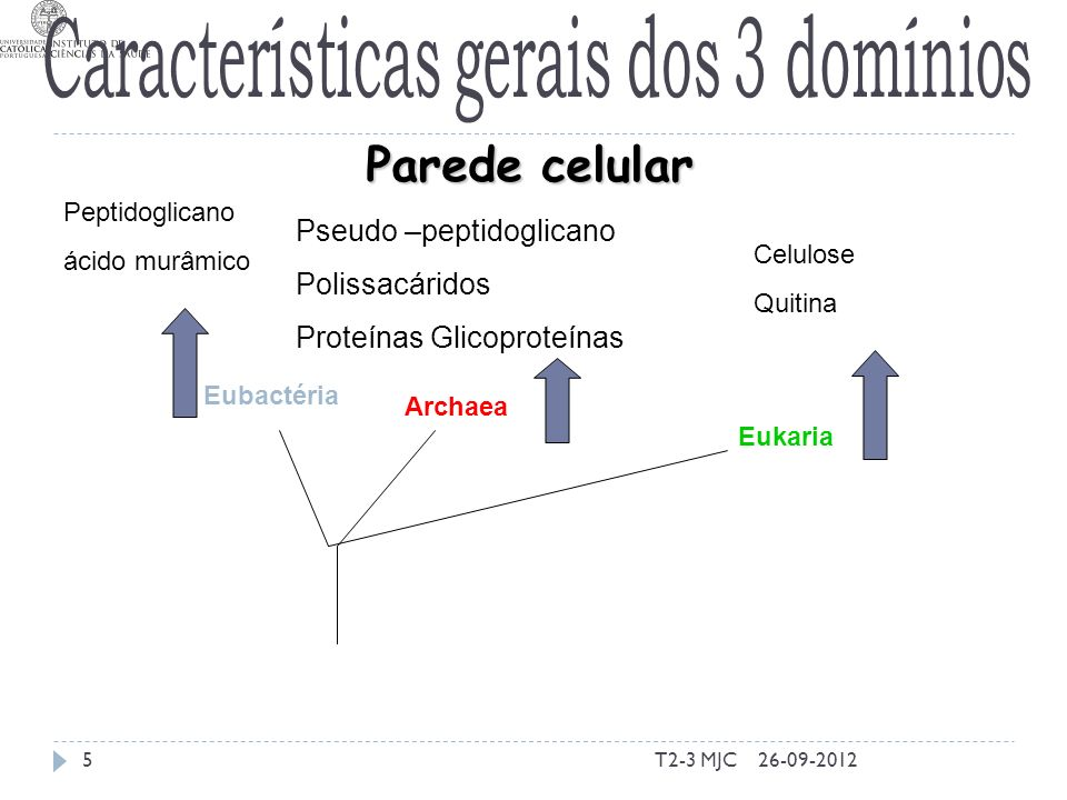 T2-3 MJC5 Eubactéria Archaea Eukaria Parede celular Peptidoglicano ácido murâmico Pseudo –peptidoglicano Polissacáridos Proteínas Glicoproteínas Celulose Quitina 26-09-2012