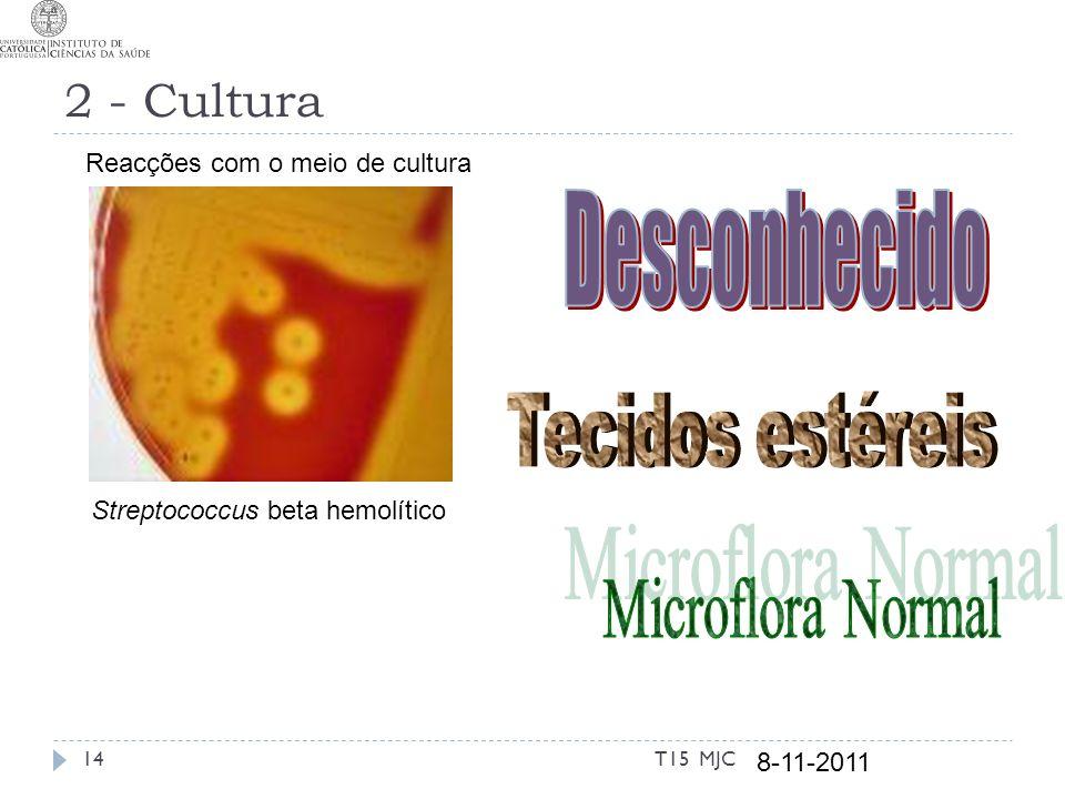 2 - Cultura Streptococcus beta hemolítico 8-11-2011 14T15 MJC Reacções com o meio de cultura
