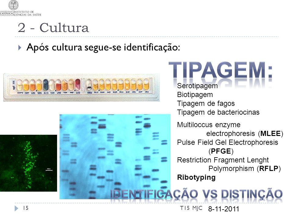 2 - Cultura Após cultura segue-se identificação: T15 MJC Multiloccus enzyme electrophoresis (MLEE) Pulse Field Gel Electrophoresis (PFGE) Restriction