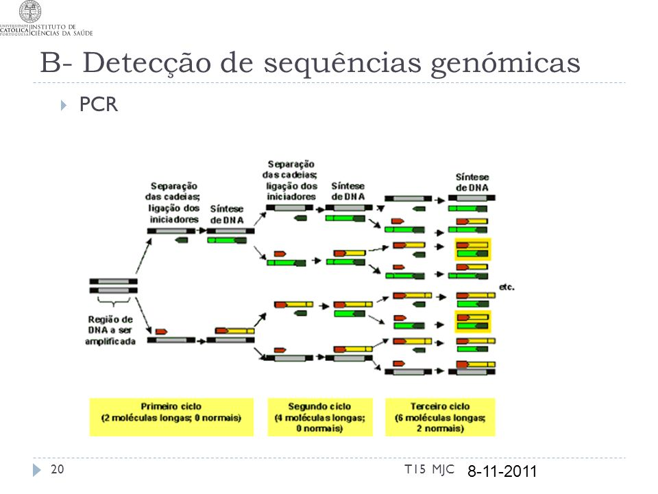 B- Detecção de sequências genómicas PCR Visualização Utilização noutras técnicas T15 MJC 8-11-2011 21