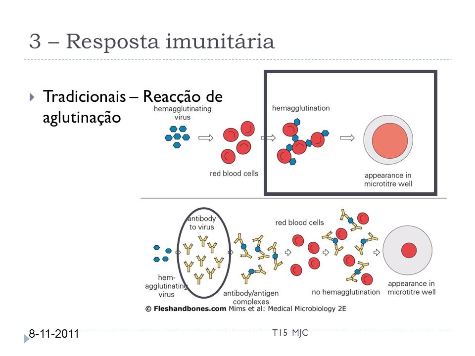 3 – Resposta imunitária Tradicionais – Reacção de aglutinação 8-11-2011 T15 MJC
