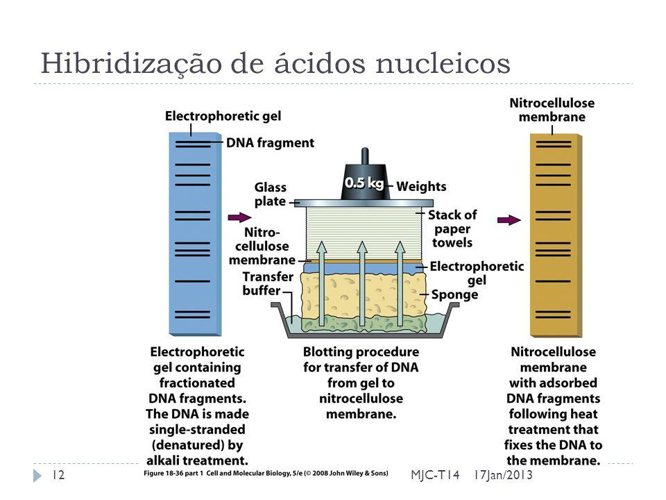Hibridização de ácidos nucleicos 17Jan/201312MJC-T14