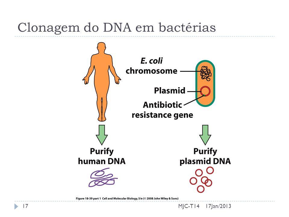 17Jan/201317MJC-T14 Clonagem do DNA em bactérias