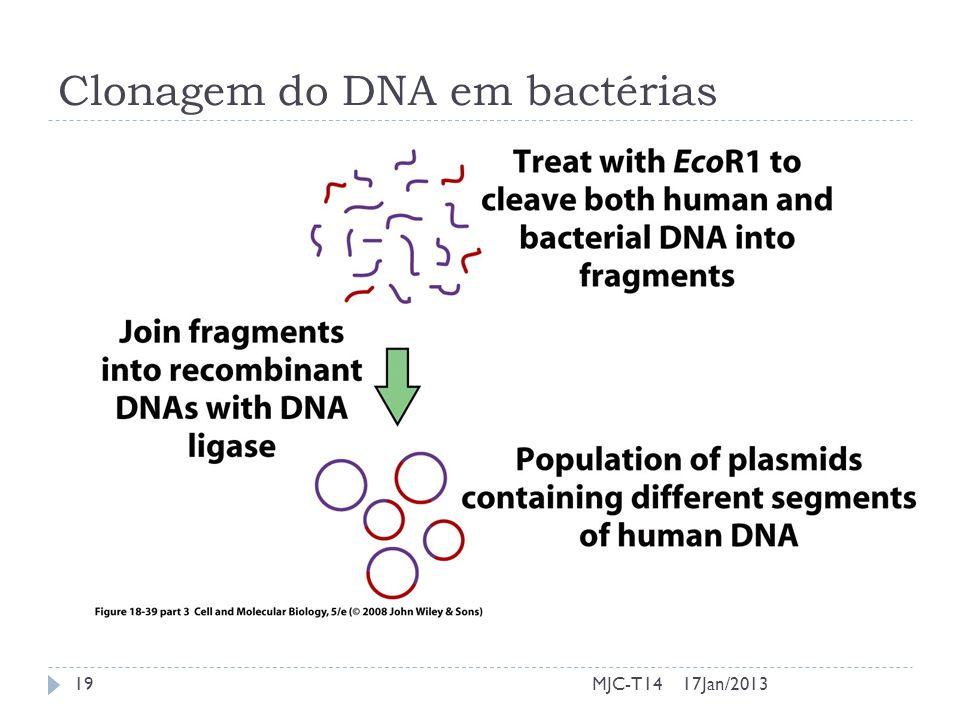 17Jan/201319MJC-T14 Clonagem do DNA em bactérias