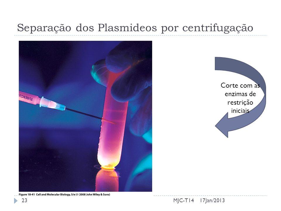Separação dos Plasmideos por centrifugação 17Jan/201323MJC-T14 Corte com as enzimas de restrição iniciais