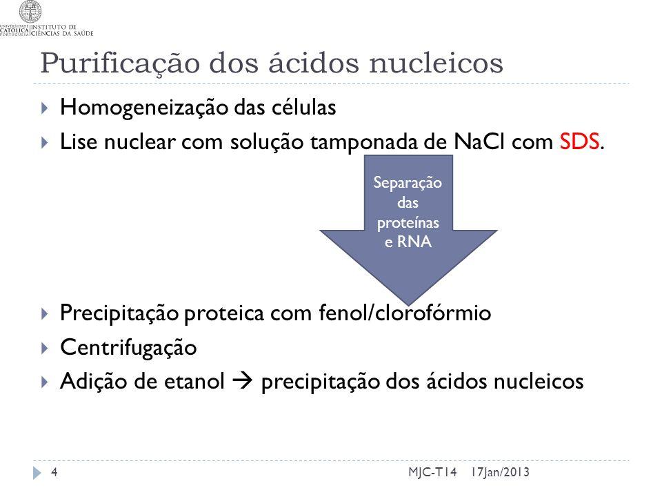 Purificação dos ácidos nucleicos Homogeneização das células Lise nuclear com solução tamponada de NaCl com SDS. Precipitação proteica com fenol/clorof