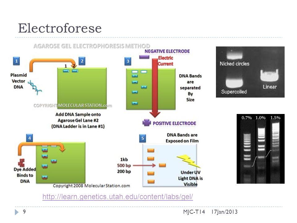 17Jan/201320MJC-T14 Clonagem do DNA em bactérias